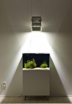 Less is More: Declutter with Aquarium Minimalism - Okeanos Aquascaping - Simplistic Minimal Aquarium Designs