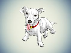 How to Keep a Jack Russell Terrier Happy -- via wikiHow.com