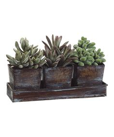 Enjoy natural beauty all year round with this trio of artificial potted plants. This low-maintenance arrangement comes in an elegant tray that's perfect for displaying on the table, window or anywhere for a little garden-fresh touch. Artificial Succulents, Faux Succulents, Planting Succulents, Artificial Flowers, Succulent Plants, Succulent Bowls, Cacti Garden, Succulent Containers, Silk Plants