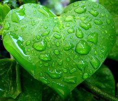 Leaf<3
