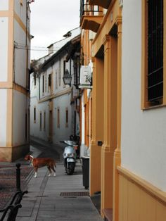 Cordoba street view with a dog, looking for a pension to stay ..