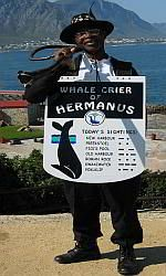 July: Visit the Hermanus Whale Festival in Cape Town. The arrival of whales in the town are announced by the world's only 'whale crier'.