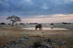Ethosa National Park - Namibia - 2012