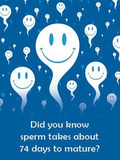 Fertility Facts: Sperm Regeneration