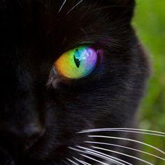#kittens #pets #cats #animals