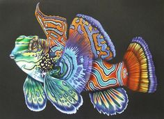 Mandarinfish (page 16) Intricate Ink Animals In Detail Volume 2. A coloring book by Tim Jeffs. Colored by Jacqueline Noordijk.