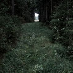 Nature Photography — In Praise of Observation – pictures world Dark Green Aesthetic, Nature Aesthetic, Paradis Sombre, Images Terrifiantes, Art Ancien, Slytherin Aesthetic, Dark Forest, Foggy Forest, Magical Forest