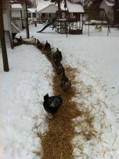 This Little Egg  - chicken path