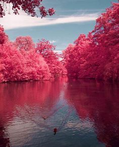Awesome Cherry River – So Beautiful