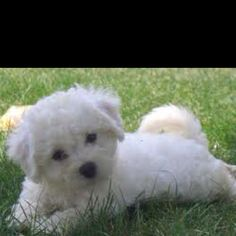 Is this the little guy you want @fallonstefani?