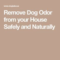 Remove Dog Odor from your House Safely and Naturally