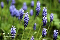 Digital print digital picture flower Mauve by pixelphotogift