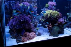 Best tanks from around the world. - Page 24 - Reef Central Online Community