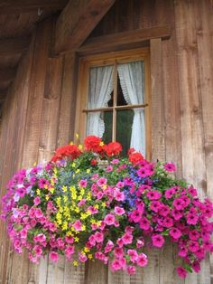 Now that is one full window box...... |Pinned from PinTo for iPad|
