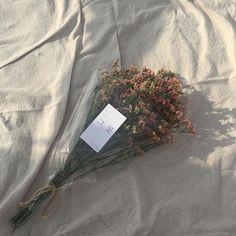 - ᴍɪʀᴢʜɴᴀɴɪᴀᴀᴀ - Flower Aesthetic, White Aesthetic, Aesthetic Photo, Aesthetic Pictures, Jandy Nelson, Bouquet, No Rain, Foto Art, My Flower