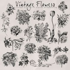 vintage flowers. I like the one growing out of the ground about to bloom for a tattoo