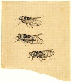 Vincent van Gogh, Three Cicadas, 1889