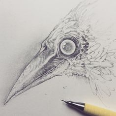 Vonn Sketch by on DeviantArt Animal Sketches, Art Sketches, Art Drawings, Artist Alley, Rabe, Art Sketchbook, Traditional Art, Art Inspo, Art Reference