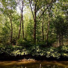 【wx920313510wx】さんのInstagramをピンしています。 《IMiss you#miss #森林 #reゼロから始める異世界生活》