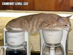 おかしな猫たち04