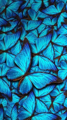 iPhone 8 Wallpaper Blue Butterfly with HD Resolution iPhone 8 Wallpaper Blue Butterfly is the best high definition iPhone wallpaper in You can make this wallpaper for your iPhone X backgrounds, Mobile Screensaver, or iPad Lock Screen Iphone 8 Wallpaper, Aesthetic Iphone Wallpaper, Aesthetic Wallpapers, Wallpaper Backgrounds, Walpaper Iphone, Desktop Backgrounds, Mobile Wallpaper, Butterfly Wallpaper Iphone, Flower Wallpaper