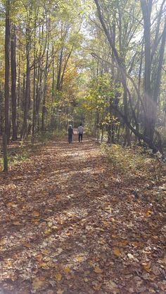 Trail at Bombay Hook National Wildlife Refuge