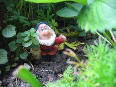 I want a garden dwarf... and a garden too, actually!