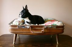 Upcycled Suitcase/Dog Bed