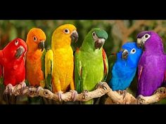 Funny Parrots Compilation