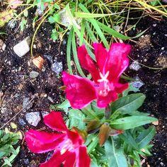 Последние цветы жаркого лета