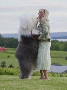 Sheep dog Huge Dogs, I Love Dogs, Giant Dogs, Massive Dogs, Cute Big Dogs, Adorable Dogs, Baby Animals, Funny Animals, Cute Animals