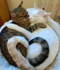 Cute Cats, Adorable Cute Animals, I Love Cats, What's True Love, Your Child, Kittens And Puppies, Cats And Kittens, Cat Tail Meaning, Children