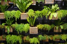 Living walls are trendy among both landscapers and interior designers. Also called vertical gardens, living walls are an attractive, modern way to add greenery…