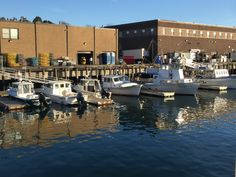 Local lobster boats & fishing boats