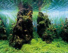 by Takashi Amano, ADA Nature Aquarium Calendar 2013www.facebook.com/nature.aquarium.setup