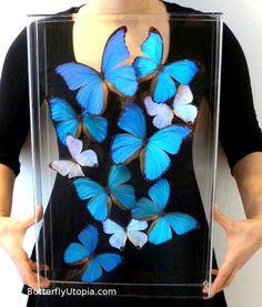 Framed Blue Morphos (Blue Butterflies)