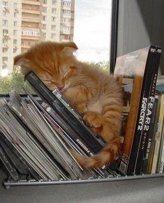 Kleine Katze schläft zwischen CDs