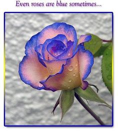 Even roses are sometimes blue.