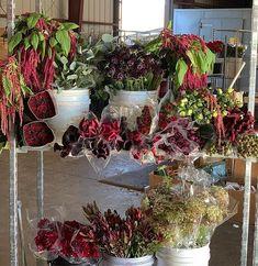 Beautiful burgundy flower selection from Florabundance Wholesale Burgundy Flowers, Plants, Beautiful, Flora, Plant