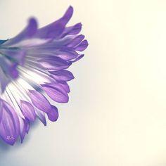 11:10 #photo #photography #picture #flowers #flowerslovers #flowerzdelight #ig_flowers #flowersofinstagram #flowerstalking #softfocus #flowersandmacro #pasandha__flowers #macrophotography #instadiary #tv_flowers #ig_japan #ig_artistry #flair_macro #macro_perfection #macro_freaks #macro #macro_vision #bestshotz_flowers #panasonic #lumixg6 #sigma #mastersofwhiteness #spurflower #japan #sapporo