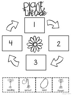 All About Plants Preschool level plant life cycle worksheet. All About Plants Preschool level plant Kindergarten Science, Kindergarten Worksheets, Plant Life Cycle Worksheet, Plant Lessons, All About Plants, Plant Crafts, 2 Kind, Plant Science, Life Science