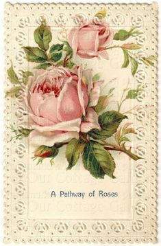 Antique Roses | Antique ROSES Postcards LACE Borders