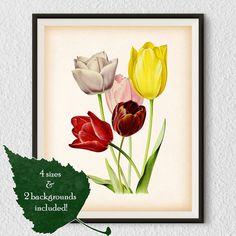 Flower print, Floral wall art, Botanical print, Tulip art, Living room prints, Flower print vintage, Antique print, Instant download, #41
