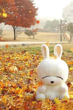 I got Mashimaro for Christmas Kawaii Plush, Kawaii Cute, Kawaii Stuff, All Animals Photos, Kids Shows, My Baby Girl, Plushies, Autumn Leaves, Bunny