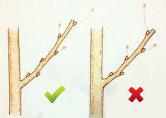Cum si cand se curata pomii fructiferi? | Casa Si Design Bonsai Tree Care, Bonsai Tree Types, Bonsai Garden, Garden Trees, Grow Banana Tree, Grafting Plants, Espalier Fruit Trees, Vegetable Garden Tips, Apartment Plants