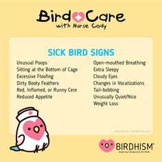 Cockatiel Care, Parakeet Care, Baby Budgies, Bird Mom, Hamster Toys, Common Birds, Bird Aviary, Conure, Cute Birds