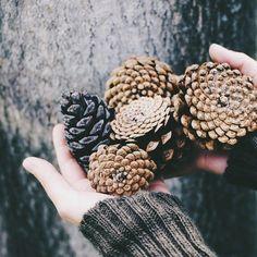 fall | autumn