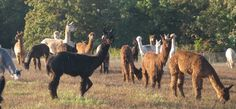Rockin' W Alpaca Ranch - FeltLOOM friends and customers