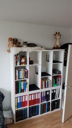 Einrichtung Storage space, shelf, cat bed, climbing tree, more beautiful living with cats What Foods Cat Shelves, Ikea Shelves, Kallax Ideas, Cat Wall Furniture, Nursery Bookshelf, Animal Room, Ideas Hogar, Cat Room, Cat Decor