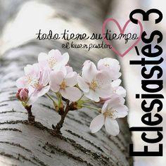 YO SOY EL BUEN PASTOR: Eclesiastés 3